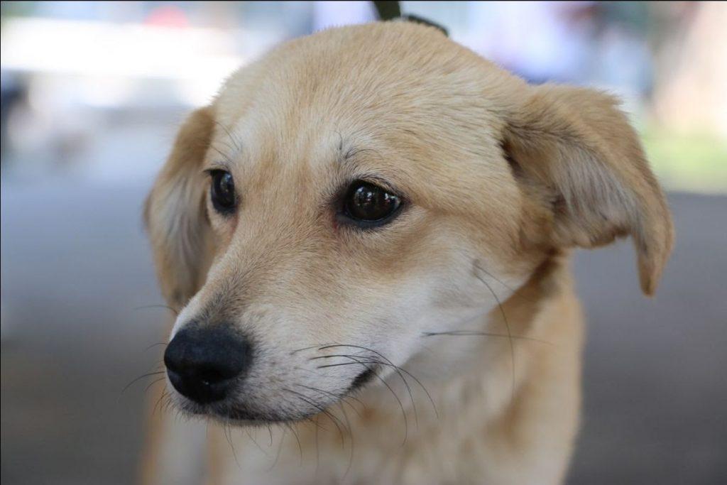 Consejos prácticos para educar a nuestros perros