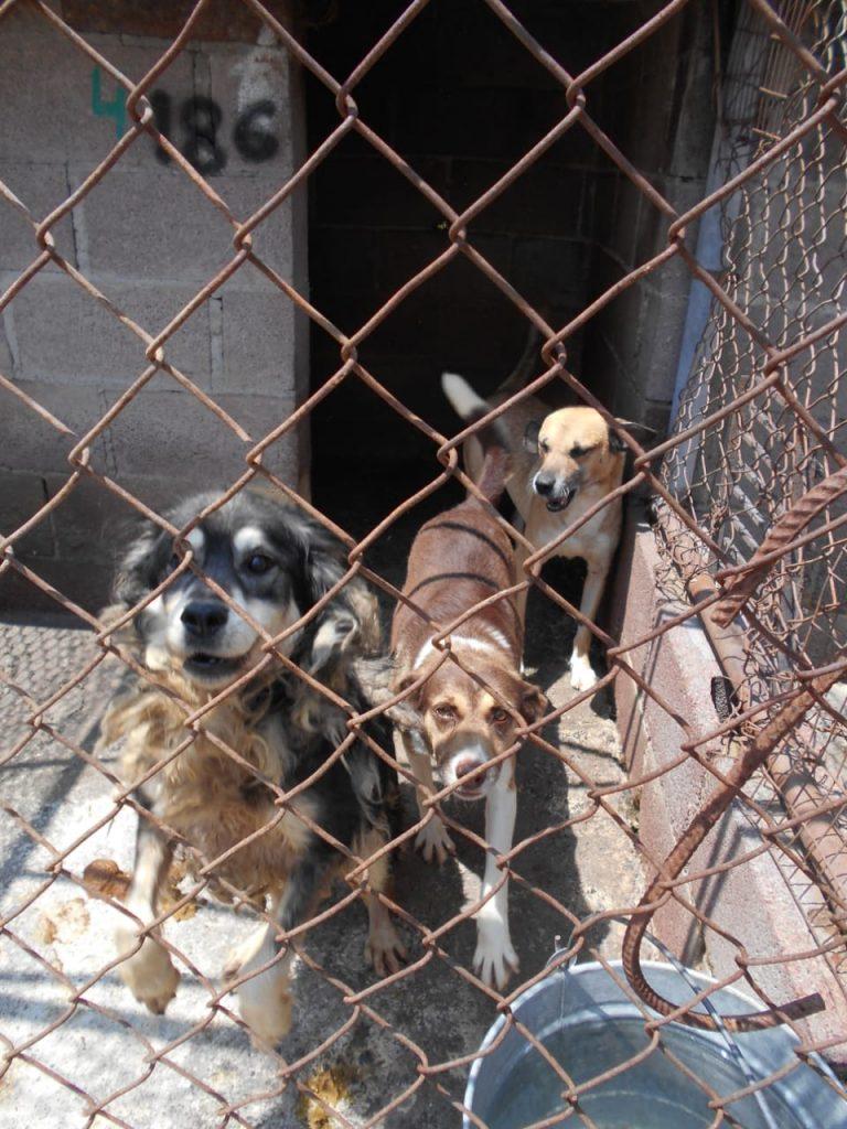 Albergues de animales registrarán hambruna por falta de alimento