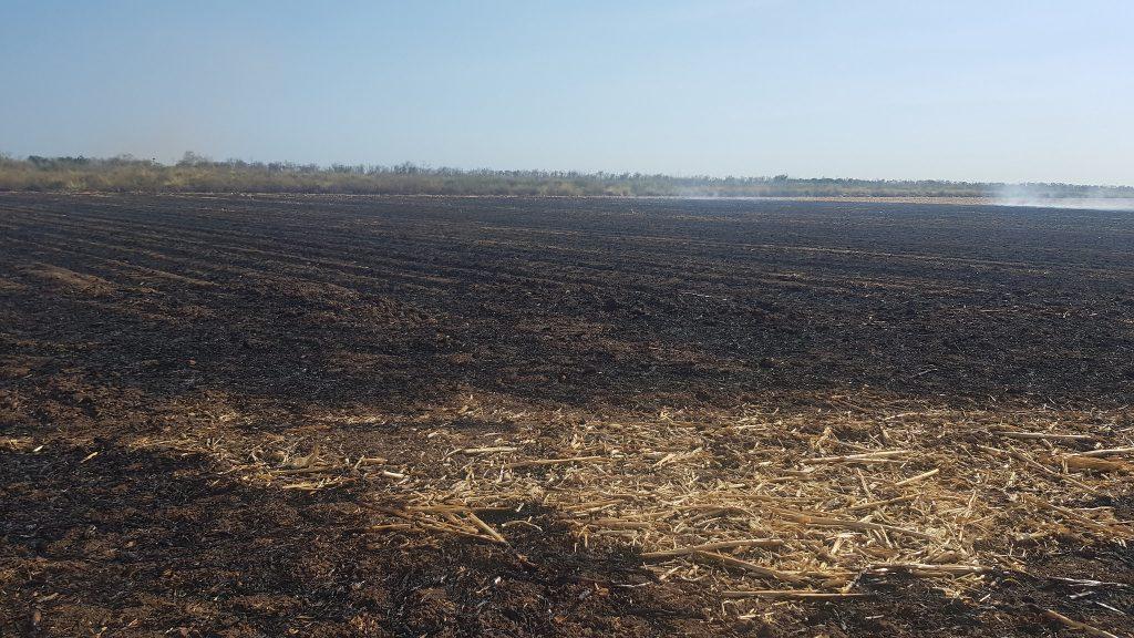 Las quemas agrícolas ocasionan la muerte de insectos benéficos