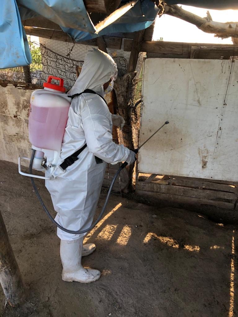 La EHVC es una enfermedad viral exótica para México