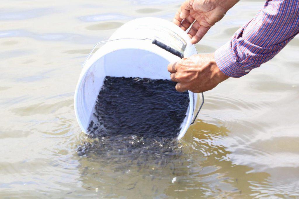 Tiene el objetivo de fortalecer la producción de la pesquería