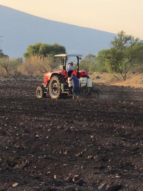 El sector primario espera cosechas por 290 millones de toneladas de alimentos de todo tipo