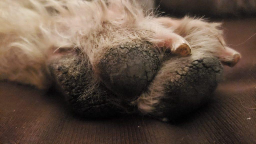 El golpe de calor ocasiona desmayo en tu perro