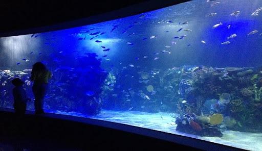 AZCARM urge que se abran los acuarios