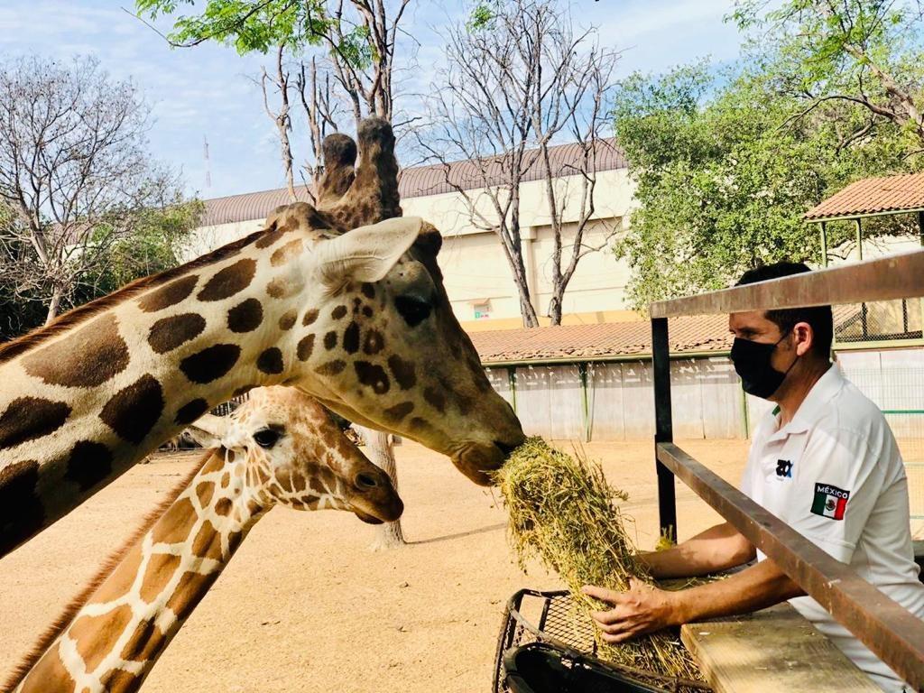 Azcarm también pide abrir zoológicos dentro de la nueva normalidad