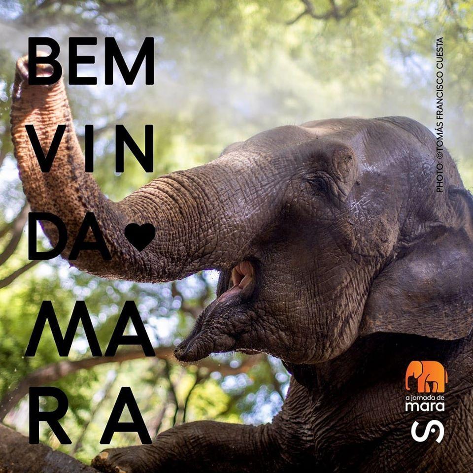 La elefante Mara llegó al Santuario de Brasil