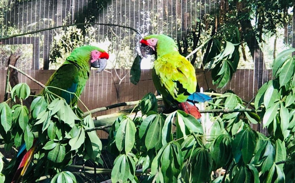 El Zoológico de Cualiacán ha recogido 100 animales
