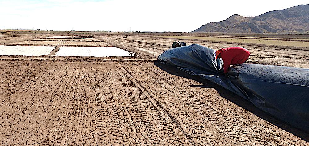 Desinfestación biológica del suelo es una alternativa a químicos