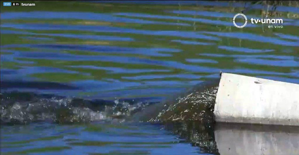 Necesario monitorear aguas residuales para detectar SARS-COV-2