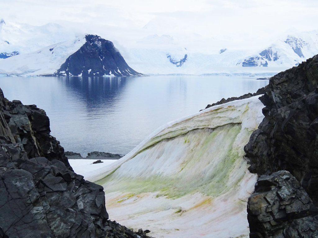 La 'nieve verde' de la Antártida está absorbiendo carbono del aire