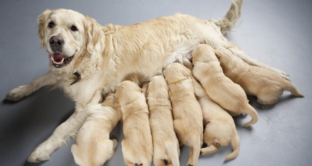 Esterilización temprana como prevención de enfermedades en animales