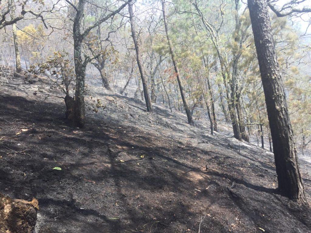 Incendio forestal en volcán Iztaccíhuatl fue liquidado