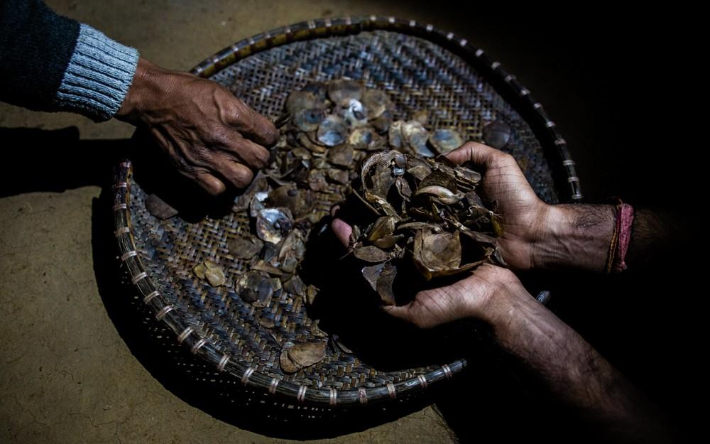 China confisca 2.2 toneladas de escamas de pangolín
