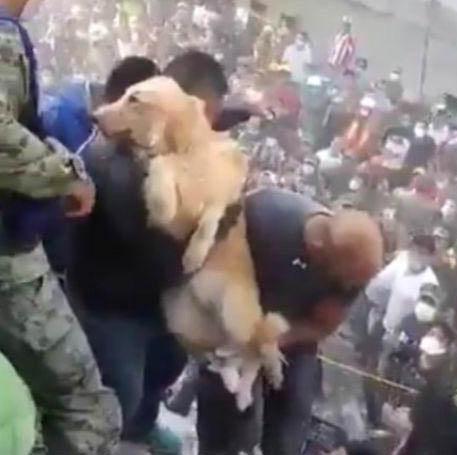 No abandones a ningún animal durante evacuaciones por sismo