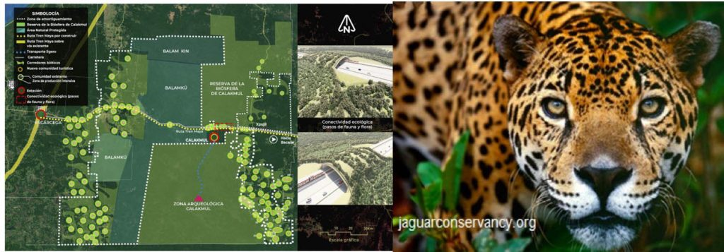 Sin justicia ambiental y comercio ilegal de especies: arranca Tren Maya
