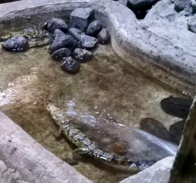 Recoge AZCARM animales silvestres de Centro de Conservación