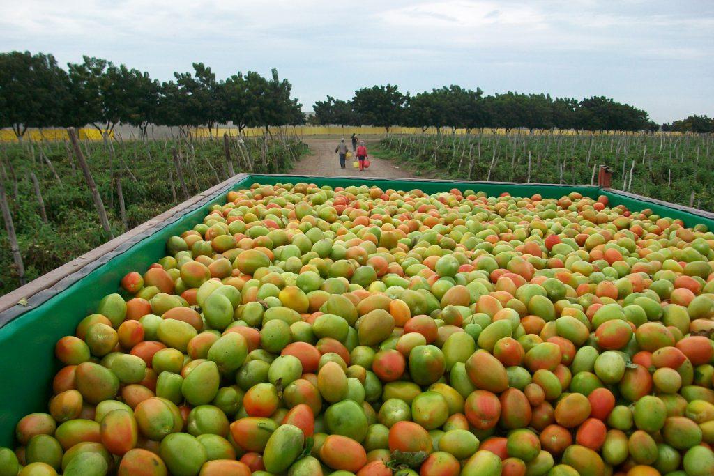 Superávit agroalimentario se ubicó en cinco mil 985 millones de dólares