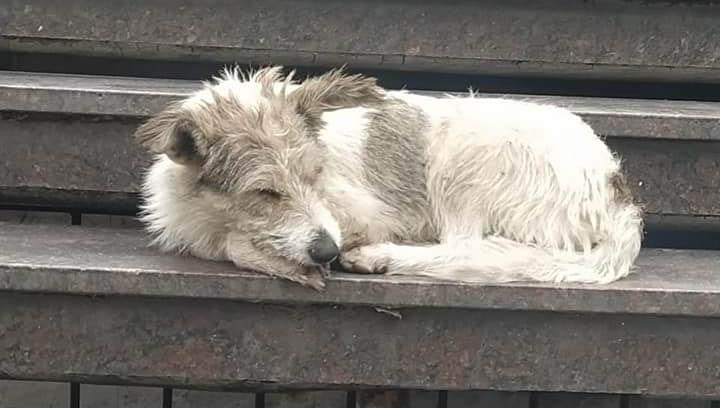Urgen a Congreso CDMX políticas públicas ante abandono de animales