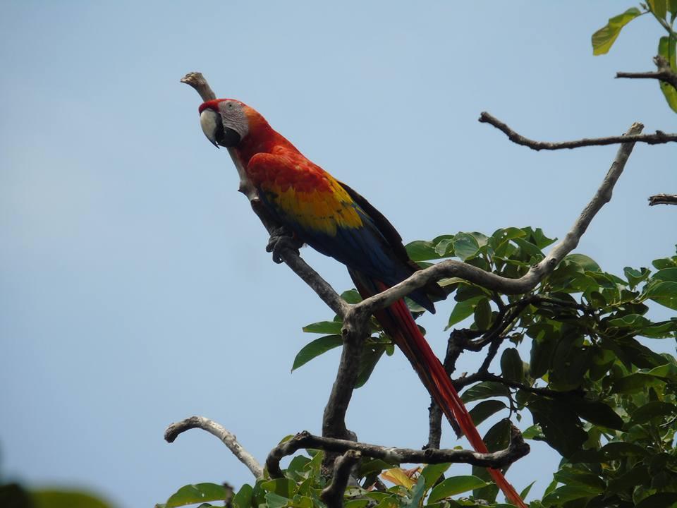 Gracias al COVID-19: vida reproductiva de aves fue tranquila