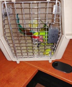 Implementan rescate de aves protegidas en Durango y Estado de México