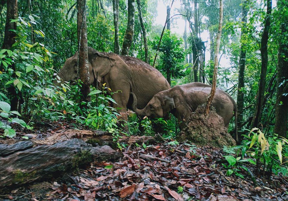 ¡Tú puedes liberar a un elefante de la crueldad de la industria turística!