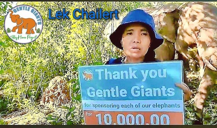 Elefantes de Tailandia tendrán un hogar sin esclavitud