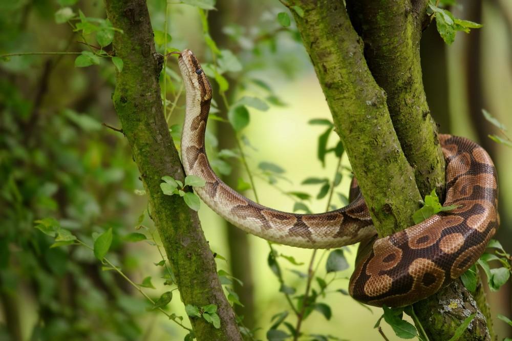 ¿Son las serpientes una mascota adecuada? Prueba tus conocimientos
