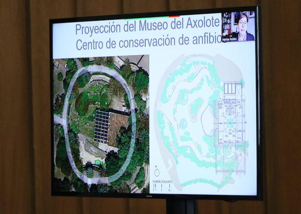 Restaurarán humedal de Xochimilco y Museo del Axolote
