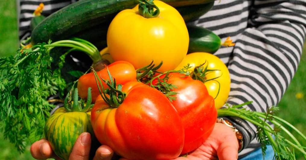 Agroecología provee alimentos más sanos