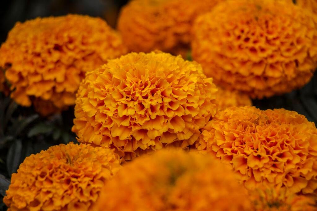 CDMX se pinta de amarillo por Día de Muertos
