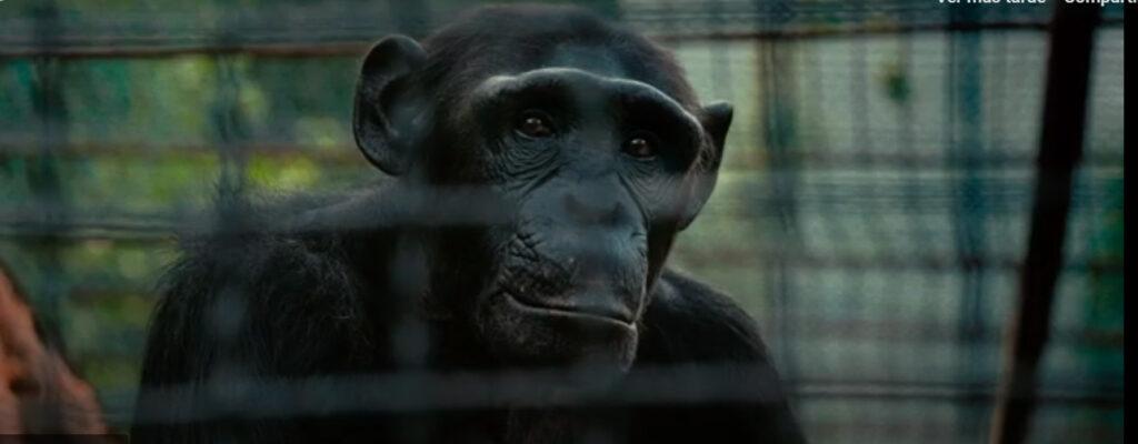Instan a poner fin al encierro de animales enjaulados