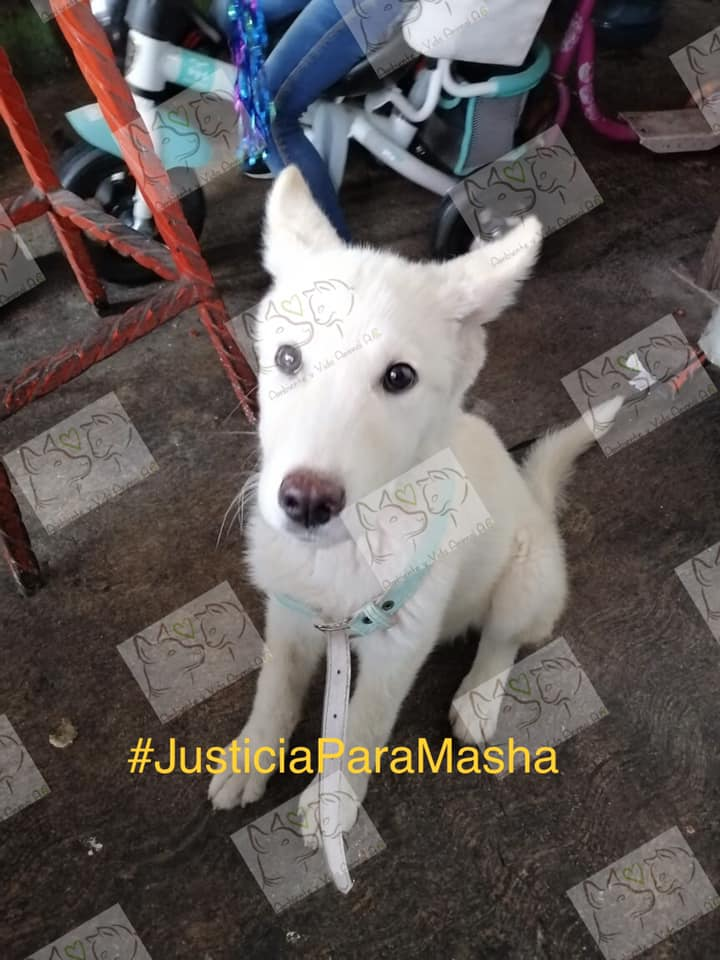 #JusticiaParaMasha: piden castigo para asesino de perrita