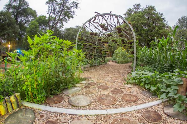 Avanza concurso Jardín Temático-Etnobotánico