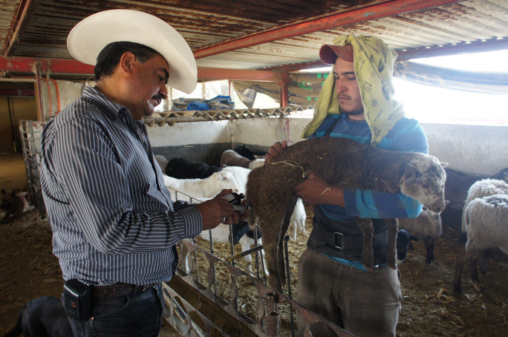 OIE reconoce a México por uso de antimicrobianos