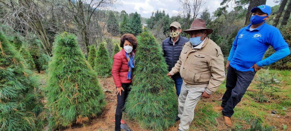 Inicia venta de árboles de Navidad en CDMX