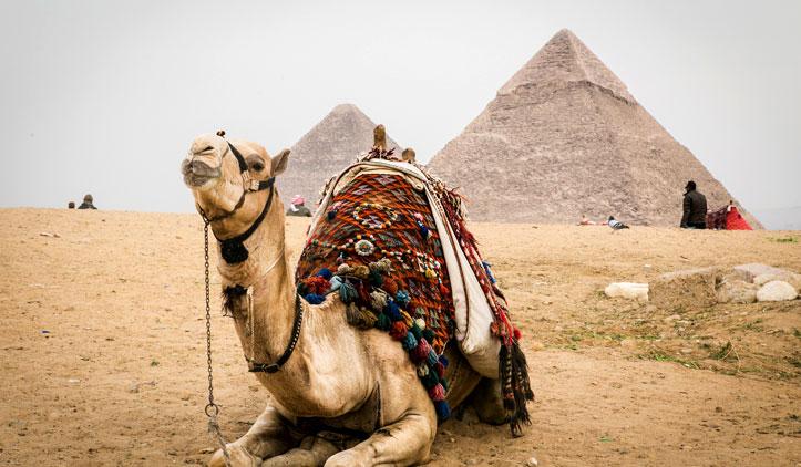 Prohibirán camellos para visitar pirámides de Egipto