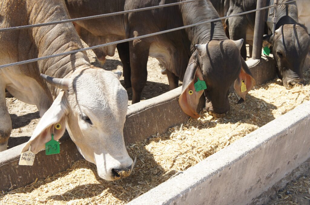 Inhiben uso de sustancias prohibidas en ganado