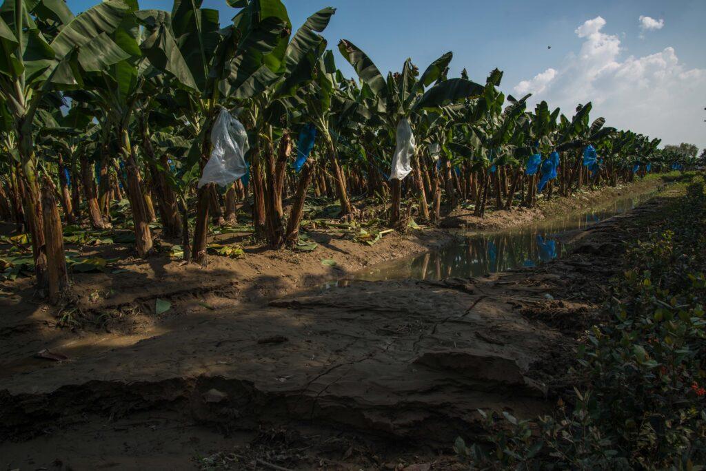 Atienden unidades productivas afectadas por lluvias