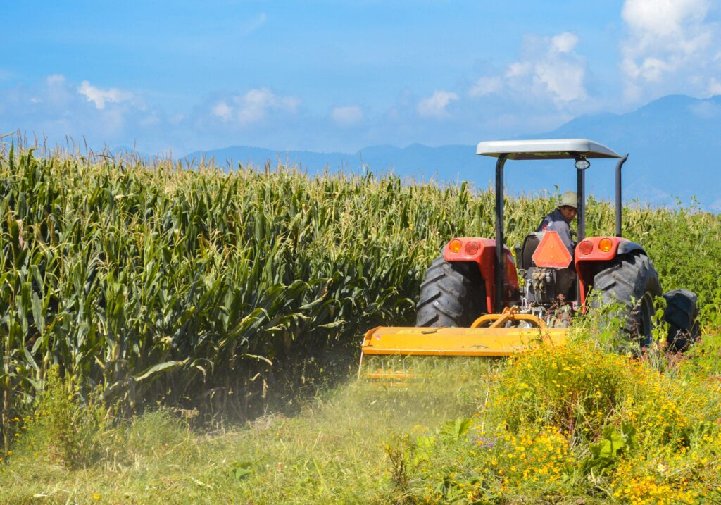 Reciben insumos más del 60% de productores de maíz