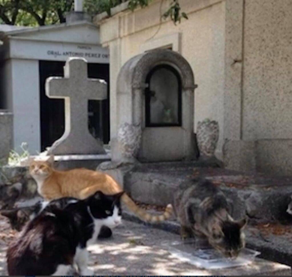 UPA atiende animales en estado vulnerable
