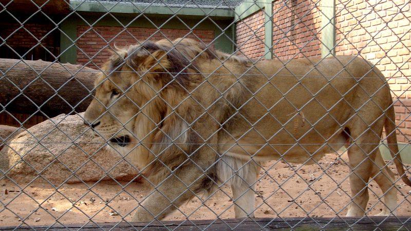 Zoológico de Islamabad será santuario de animales