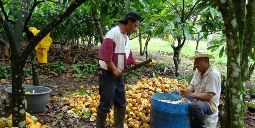 Integran a productores de miel en apoyos directos