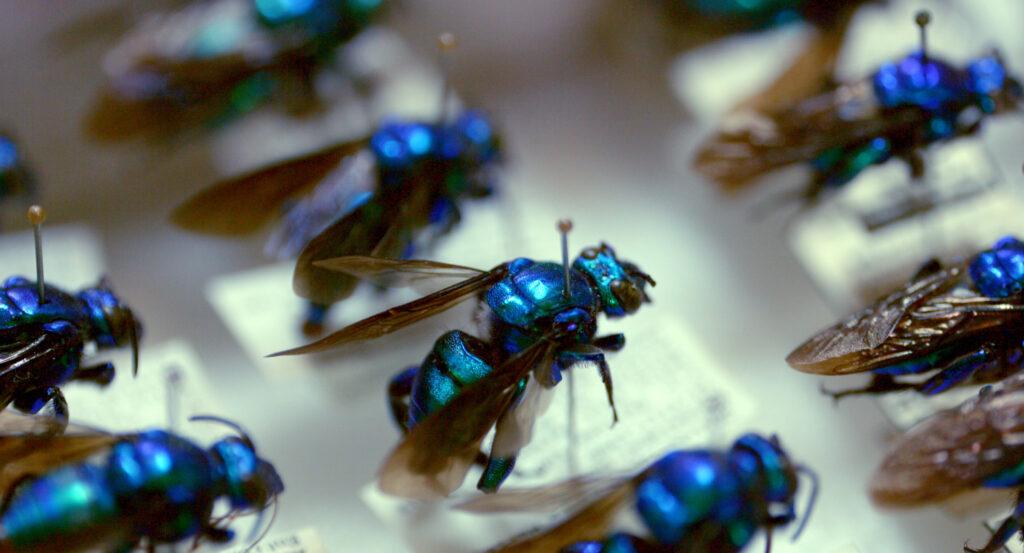 Documental sobre Museo de Zoología obtiene premio