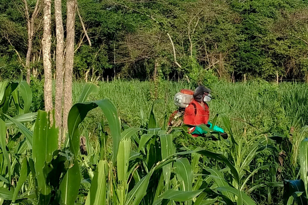 Capacitan a productores en Buen Uso de Plaguicidas