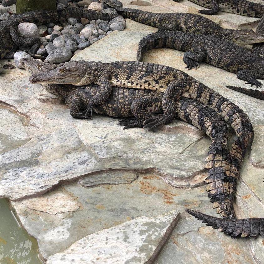 Secuestran cientos de animales en Croco Cun Zoo