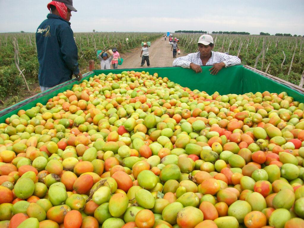 Celebran Año Internacional de las Frutas y Verduras 2021