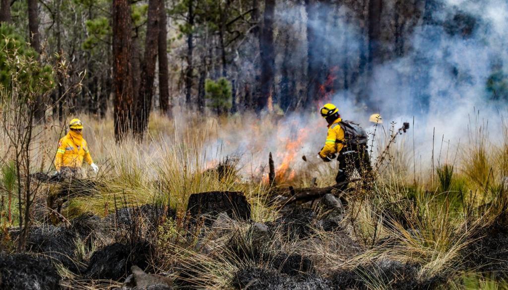 Disminuyen 48.69%  incendios forestales