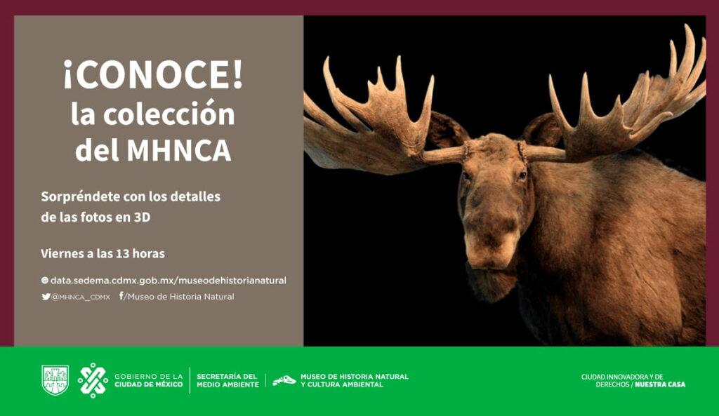 Sorprende Museo de Historia Natural con fotografías 3D