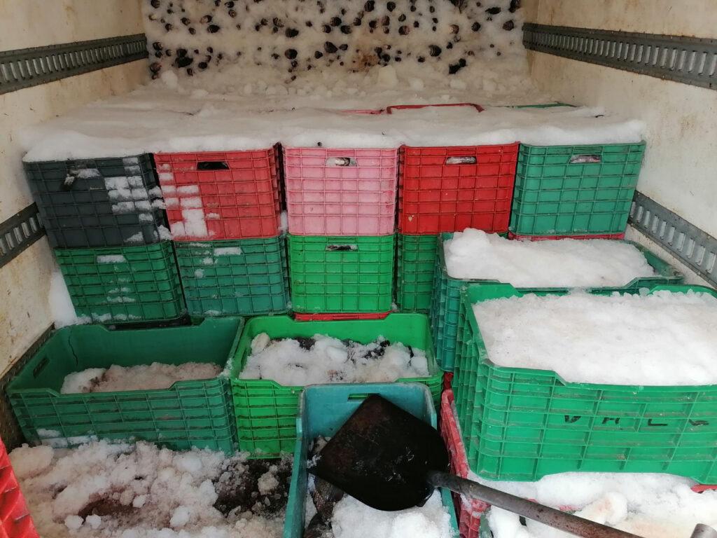 Aseguran más de 35 toneladas de producto pesquero