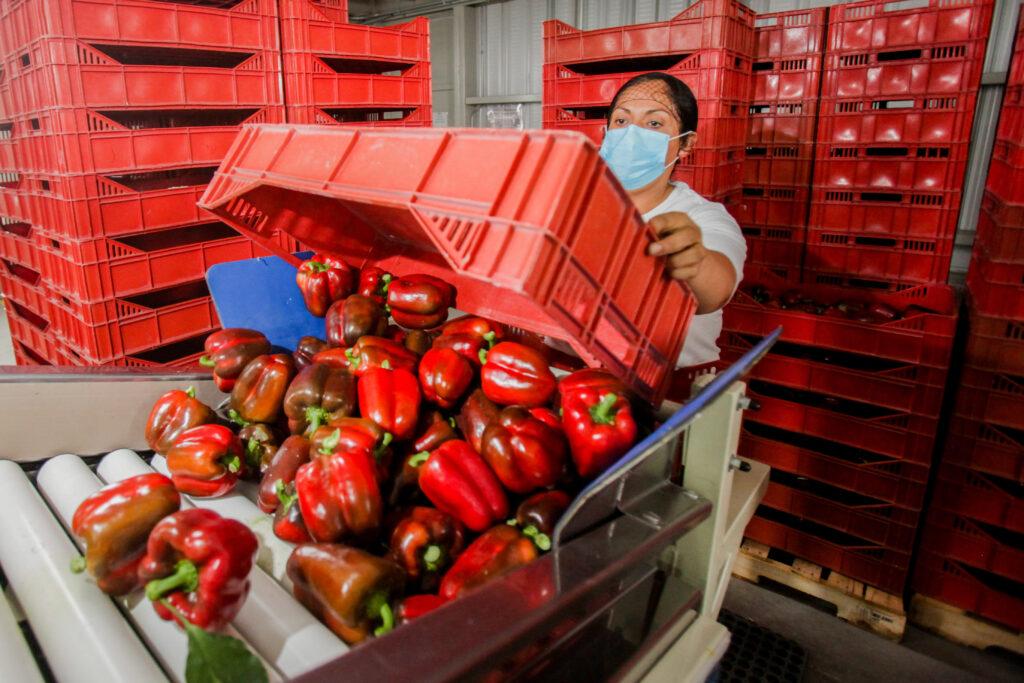 Más de 86 mil productores oaxaqueños recibieron apoyos